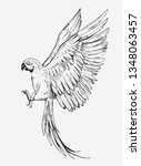 parrot sketches. hand drawn...   Shutterstock .eps vector #1348063457