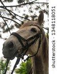 white gray horse grazing on the ... | Shutterstock . vector #1348118051