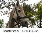 white gray horse grazing on the ... | Shutterstock . vector #1348118054