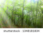 the lowland deciduous forest in ... | Shutterstock . vector #1348181834