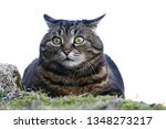 a small fat cat sits with a... | Shutterstock . vector #1348273217