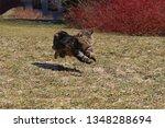 a norwegian forest cat running... | Shutterstock . vector #1348288694