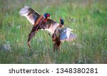 a pair of male common pheasants ... | Shutterstock . vector #1348380281