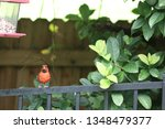 red male northern cardinal... | Shutterstock . vector #1348479377