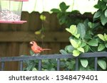 red male northern cardinal... | Shutterstock . vector #1348479401