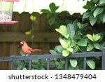 red male northern cardinal... | Shutterstock . vector #1348479404
