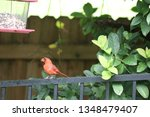 red male northern cardinal... | Shutterstock . vector #1348479407
