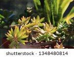 pretty green succulent plants...   Shutterstock . vector #1348480814