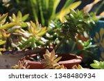 pretty green succulent plants...   Shutterstock . vector #1348480934