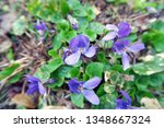 close up shot of lobelia... | Shutterstock . vector #1348667324