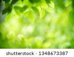 closeup nature view of green... | Shutterstock . vector #1348673387