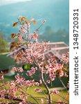 prunus cerasoides  wild... | Shutterstock . vector #1348720331