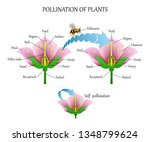 Pollinating Plants With Insects ...