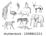 Collection of hand drawings african animals on white background