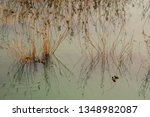 high angle view of a reed on... | Shutterstock . vector #1348982087
