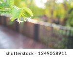 refreshing nature picture used... | Shutterstock . vector #1349058911
