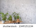potted plants on a wooden table ... | Shutterstock . vector #1349151134