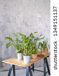 potted plants on a wooden table ... | Shutterstock . vector #1349151137