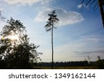 lonely pine tree on the... | Shutterstock . vector #1349162144