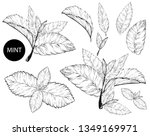 mint leaves isolated set.style ... | Shutterstock .eps vector #1349169971