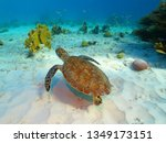 Stock photo sea turtle coral reef and white sandy seabed tropical seascape with swimming turtle underwater 1349173151