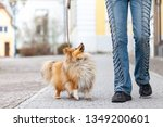 Stock photo a woman leads her dog on a leash 1349200601