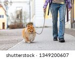 Stock photo a woman leads her dog on a leash 1349200607