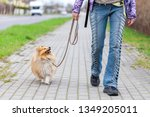 Stock photo a woman leads her dog on a leash 1349205011