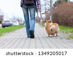 Stock photo a woman leads her dog on a leash 1349205017