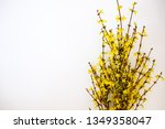 Bunch Of Fresh Forsythia Over...