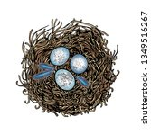 nest with bird eggs and... | Shutterstock .eps vector #1349516267