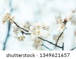 beautiful cherry blossom ...   Shutterstock . vector #1349621657