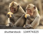 Long Tailed Macaques Monkey...
