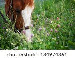 Horse Eating In Meadow