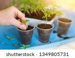 Hands Seeding  Growing Plants ...