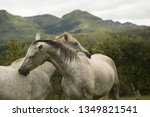 Horses In The Drakensberg