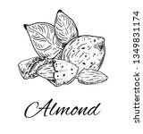 ink  almond hand drawn sketch.... | Shutterstock .eps vector #1349831174