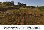 group of sheep is running.... | Shutterstock . vector #1349883881