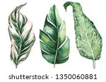 set of tropical leaves. jungle  ... | Shutterstock . vector #1350060881