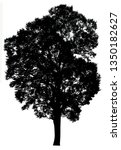 silhouette tree isolated on a... | Shutterstock . vector #1350182627