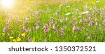 panoramic meadow with spring... | Shutterstock . vector #1350372521