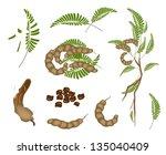 fresh fruits  an illustration... | Shutterstock .eps vector #135040409
