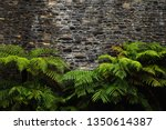lush green plant leaves and... | Shutterstock . vector #1350614387