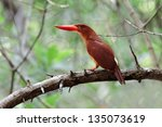 hello  ruddy kingfisher ... | Shutterstock . vector #135073619