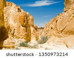 green plants among the rocks in ... | Shutterstock . vector #1350973214