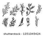 linear plant drawing   Shutterstock . vector #1351045424