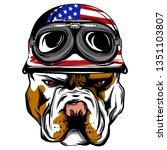 vector face of bulldog biker... | Shutterstock .eps vector #1351103807