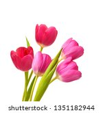 Spring Flowers Tulips Isolated...