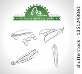 pea. hand drawn collection of... | Shutterstock .eps vector #1351243061