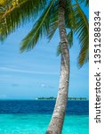 coconut tree and beautiful sea... | Shutterstock . vector #1351288334